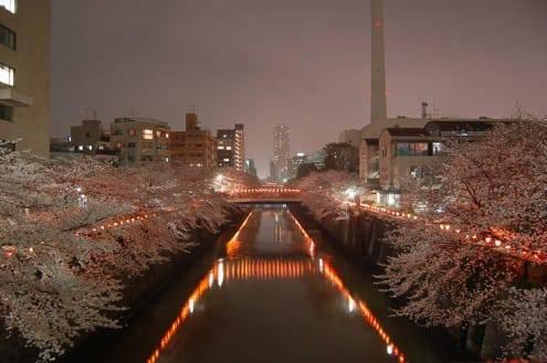 写真でわかる目黒川の桜 開花情報[2013年3月27日]