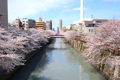 写真でわかる目黒川の桜 開花情報[2013年3月26日]