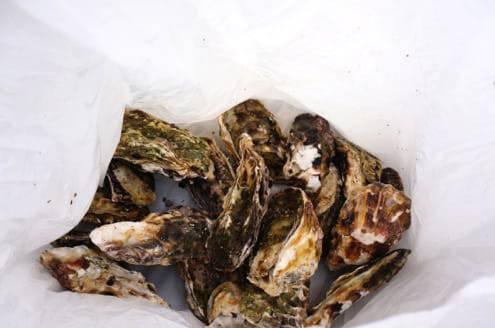 1kgの牡蠣