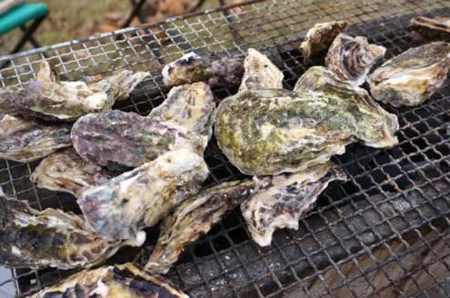 圧巻の牡蠣