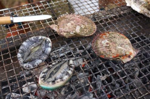 サザエとヒオウギ貝