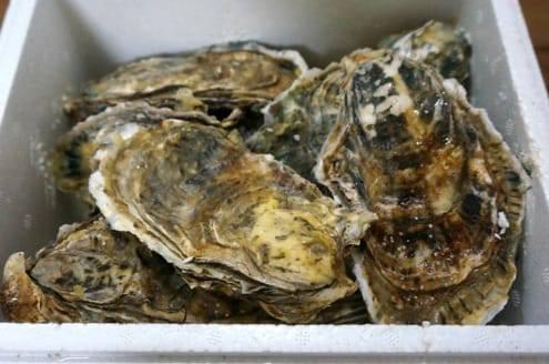 箱いっぱいの牡蠣