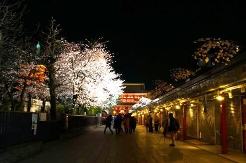 浅草寺の桜