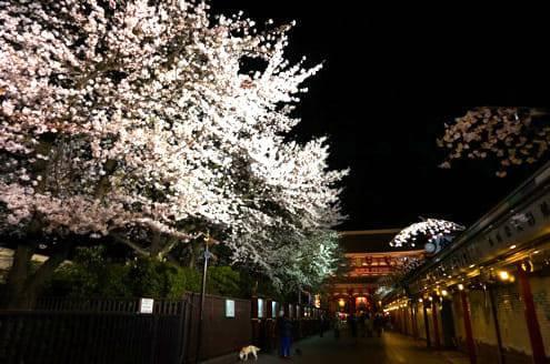 浅草寺の桜その2