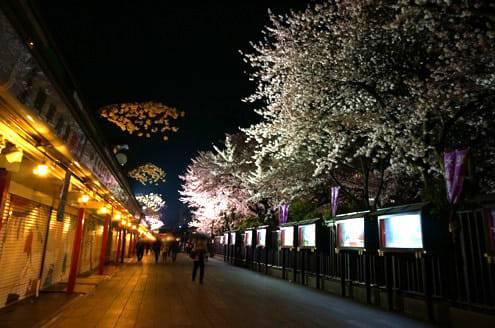 浅草寺の桜その3
