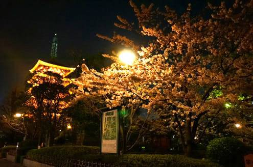 浅草寺の裏