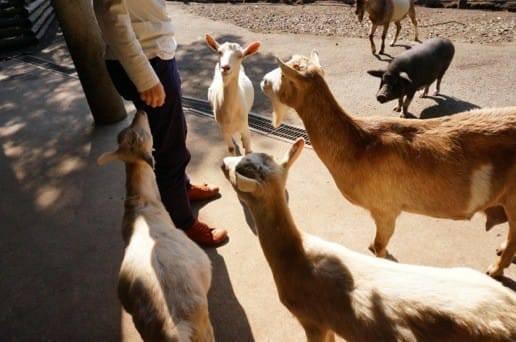 くじゅう自然動物園の動物たち