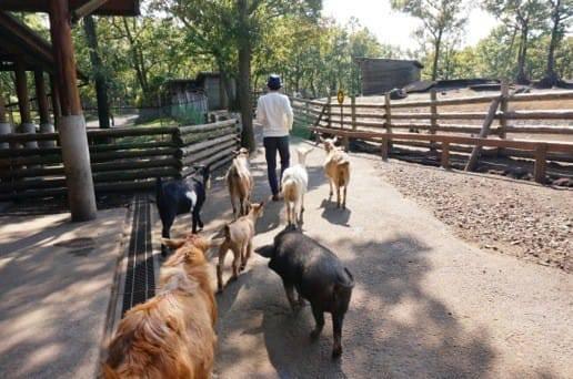 くじゅう自然動物園の動物たちがついて来る