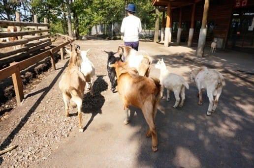 くじゅう自然動物園の動物達と散歩