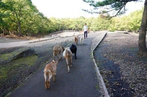 くじゅう自然動物園の動物たちと遊ぶ