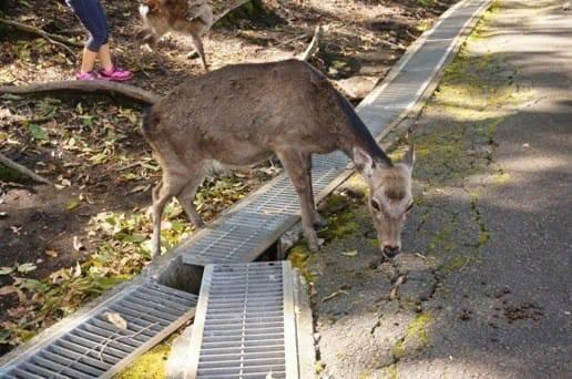 くじゅう自然動物園のバンビ