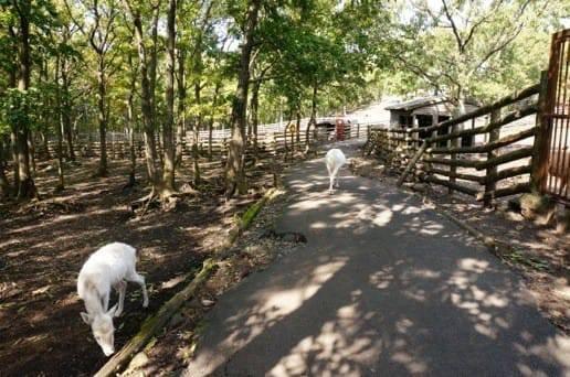 くじゅう自然動物園ののんびりした風景
