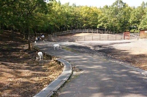 くじゅう自然動物園のヤギがたくさん
