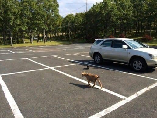 くじゅう自然動物園の自由過ぎる駐車場