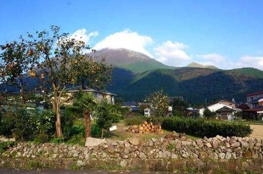 由布岳と柿の木