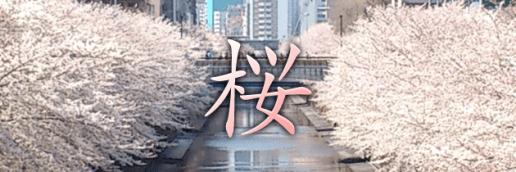 sakura_pagetop